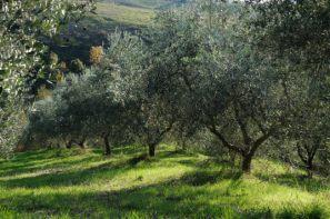 Agriturismo Pomarance